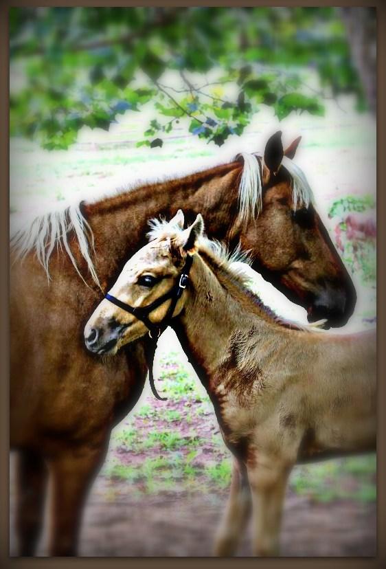 Surrey & foal vignette